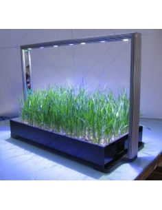 Parus Mini Farm 30 Pro (groei/bloei)