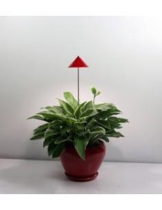 iSun-PotLed (Rood) 7Watt, zonder controller