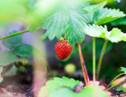 Plantenvoeding